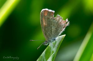 ~ Baby Moth by Enticedphotos