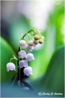 Lily Of The Valley by CecilyAndreuArtwork