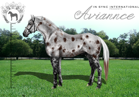 ISI Aviannce by Decorum100