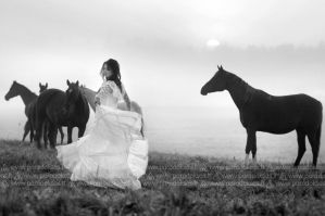Dance with horses by amisiux