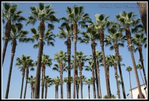 Palm Trees II by DarkestFear