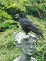 Stock crow statue by Twins72