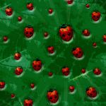 ladybird fly away home by PuccaMu