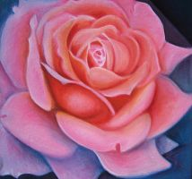 Rose in oils by karincharlotte