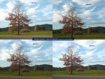 Highway Tree - ALL FOUR SHOTS by BrendanR85