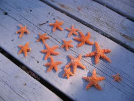 Starfish by ellebanna