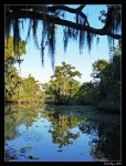 Swamp Reflection by DarthIndy