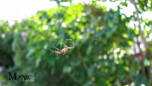 Itsy Bitsy Spider by mandeax