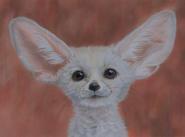 Fennec fox by Sarahharas07