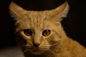 Harry Cat Stare by RileyIsPunchDrunk