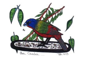 Painted Bunting by diffy