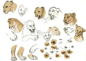 Lioness expression studies by Esava