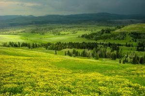 The Golden Meadow by TheRealBibbles