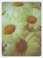 Daisies by Girlinsneakerss