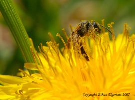 Covered in yellow by HeartofDavid79