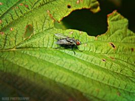 Fly On Leaf by Madz4ever