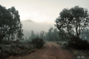 Foggy ravine on the top by Zlata-Petal