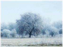 Frosty mist by irgendeine