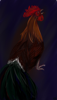 Rooster by Athri