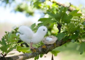 white bird with nest by freedragonfly