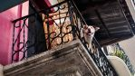 Dog Balcony by JoseAvilaPhotography