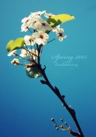 White Flowering - Spring 2013 by koshadesing