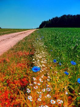 Summer flowers along the trail by patrickjobst
