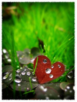 Heart of nature by my eyes your windows - Ar�iviм*  S�rekli G�ncel ..