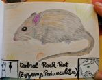 Central Rock-Rat - Animal of June 2017 by MoonyMina