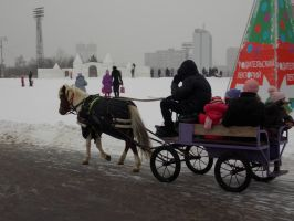 Horses. Photo in Moscow. by RedTizer
