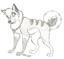 Point Commission-Balto-and-Jenna by Stray-Sketches