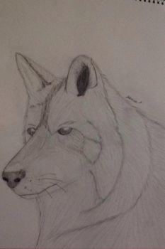 Wolf by Bean3672
