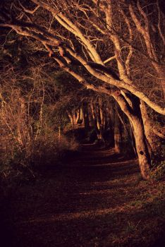 Path of the Unknown by XSomethingWickedX