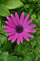 purple and green by Werden