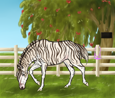 5137 SOS Markimoo by SorrelOrchardStables