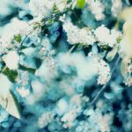 bird cherry by xutomu
