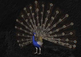Peacock Blue(Digital Painting) by chamirra