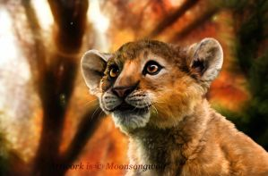 African Lion: Simba by MoonsongWolf