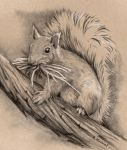 Busy Squirrel by Dusty-Feather