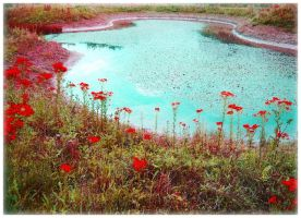 A Tribute to Monet? by Forestina-Fotos