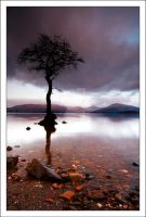 Milarrochy Tree V0.1 by DL-Photography
