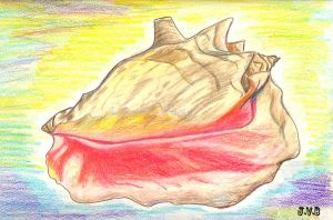 Conch Shell by CatBeast17