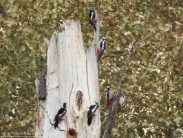 The journey of the woodpecker by resh11ka