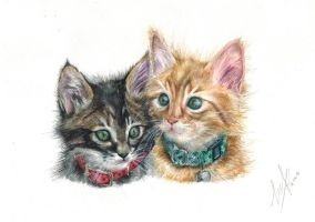 Kittens by Aiden2107