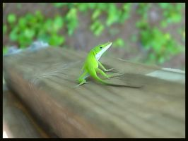 Portrait - Anole by sugabear