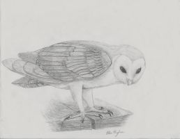 Barn Owl Sketch by CairoWolf27