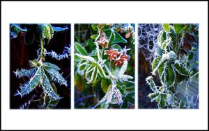 Winter's Enchantment by Forestina-Fotos