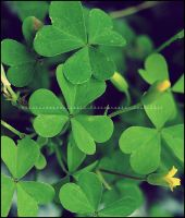 .clover patch. by GrotesqueDarling13