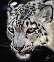 white leopard by Lu-s