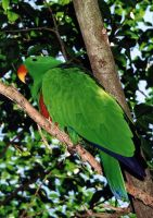 Green Parrot by pinkal00